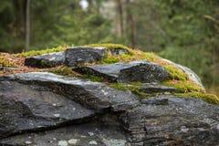 Close-up van een rots met mos in een bos Stock Afbeeldingen