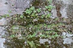 Close-up van een rotsmuur met een wijnstok Stock Foto's