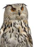 Close-up van een Siberische bubo van Eagle Owl - Bubo-3 jaar oud in Fr stock afbeeldingen