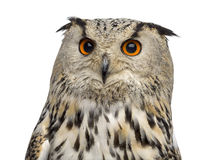 Close-up van een Siberische bubo van Eagle Owl - Bubo- stock foto