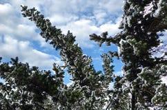 Close-up van een snow-covered tak van een Kerstboom op de achtergrond van een mooie blauwe hemel met een zachte achtergrond stock foto