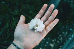 Close-up van een witte gehouden bloem royalty-vrije stock fotografie