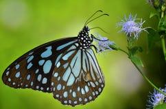 Close-up van een zwarte en blauwe vlinder stock foto's