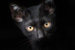 Close-up van een Zwarte Kat Royalty-vrije Stock Afbeeldingen