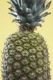 Close-up van enige ananas Stock Afbeelding