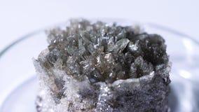 Close-up van fossiele kristallijne rots Kristallijn stuk die van donker onbehandeld mineraal op glaskop liggen op witte achtergro stock videobeelden