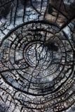 Close-up van gebrand hout. Stock Afbeeldingen