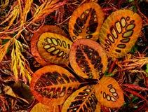 Close-up van gekleurde patronen in de mooie herfst l stock fotografie