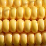 Close-up van gele die graanpitten, in keurige rijen wordt geplaatst royalty-vrije stock foto