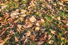 Close-up van gevallen bladeren in het de herfstseizoen Royalty-vrije Stock Afbeeldingen