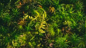 Close-up van gras zoals wildernis royalty-vrije stock afbeeldingen