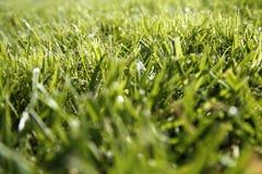 Close-up van grassprietje Stock Foto's