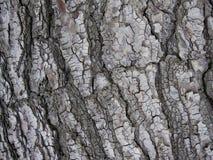 Close-up van grijze gekleurde boomschors royalty-vrije stock afbeeldingen