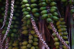 Close-up van groen palmfruit royalty-vrije stock afbeeldingen
