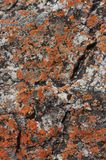 Close-up van groene en oranje korstmossen op rotstextuur in morro do bimbe, Angola royalty-vrije stock afbeelding