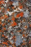 Close-up van groene en oranje korstmossen op rotstextuur in morro do bimbe, Angola stock fotografie
