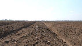 Close-up van groeven voor het planten van aardappels met speciaal materiaal het planten van seizoen, fijne de lentedag stock video