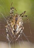 Close-up van grote spin stock fotografie