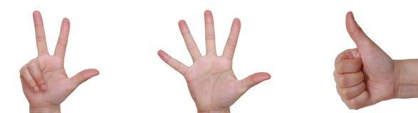 Close-up van handen die op witte achtergrond worden geïsoleerdn. Royalty-vrije Stock Afbeeldingen