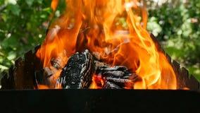 Close-up van het branden van brandhout Mooie vlammen van brand stock footage