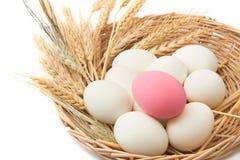 close-up van het ei van de eend Royalty-vrije Stock Foto's
