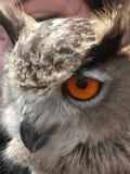 Close-up van het hoofd van een Europees-Aziatische Eagle-Uil in drie kwartmening stock fotografie