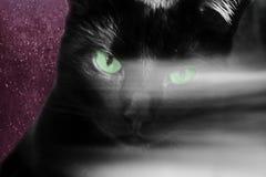Close-up van het hoofd van een zwarte kat met groene ogen waarover een witte strook is Eng esoterisch concept stock foto
