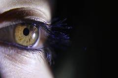 Close-up van het oog van een mooi wijfje met lange wimpers stock fotografie