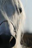 Close-up van het oog van het paard Stock Afbeelding