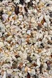 Close-up van het strand van het Eiland van de Galapagos Royalty-vrije Stock Foto's