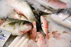 Close-up van het vers Gevangen Europese Overzeese Ijs van Bass Or Dicentrarchus Labrax On voor Verkoop in de Griekse Vissenmarkt Stock Afbeeldingen