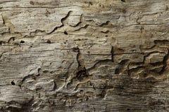 Close-up van houten korrelpatroon dat wordt geschoten Stock Fotografie
