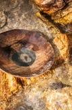 Close-up van houten pan voor goud of tinpanning in een rivier in Thai royalty-vrije stock fotografie