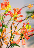 Close-up van Ikebana Royalty-vrije Stock Foto's