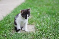 Close-up van kat in het gras Royalty-vrije Stock Afbeeldingen