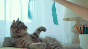 Close-up van kat het spelen met een lint stock video