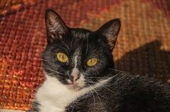 Close-up van katten` s snuit bij zonsopgang in Paraty royalty-vrije stock afbeeldingen