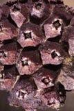 Close-up van klein Fruit Royalty-vrije Stock Afbeeldingen