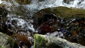 Close-up van kleine beek stock video