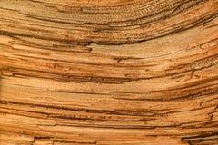 Close-up van kleurrijke textuur van een oude boom Royalty-vrije Stock Foto's