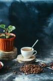 Close-up van koffiekop met geroosterde koffiebonen op zwarte achtergrond Close-up van een kop van koffie Kop van coffe Heerlijke  Royalty-vrije Stock Afbeelding
