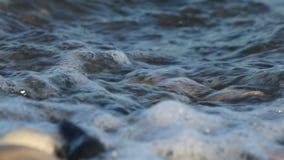 Close-up van kustkiezelsteen stock videobeelden