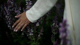 Close-up van Lavanda-bloemen stock videobeelden