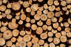 Close-up van logboeken van bomen in aard - cutted logboeken - Stock Foto