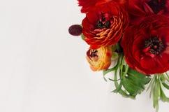 Close-up van luxe de donkerrode bloemen met exemplaarruimte op witte houten achtergrond De romantische achtergrond van de de lent Royalty-vrije Stock Foto's