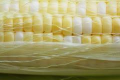Close-up van maïskolven Stock Afbeelding
