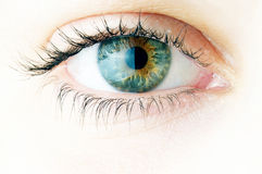 Close-up van mooi vrouwenoog Stock Foto's