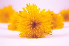 Close-up van mooie gele bloemen op een witte oppervlakte met een lichtrose achtergrond royalty-vrije stock foto's