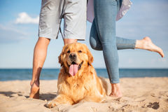 Close-up van mooie hond die op het strand liggen stock foto's