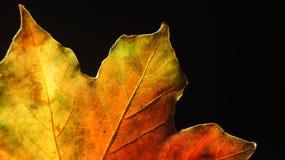 Close-up van multicoloured Autumn Leaf tegen een Zwarte Achtergrond royalty-vrije stock fotografie